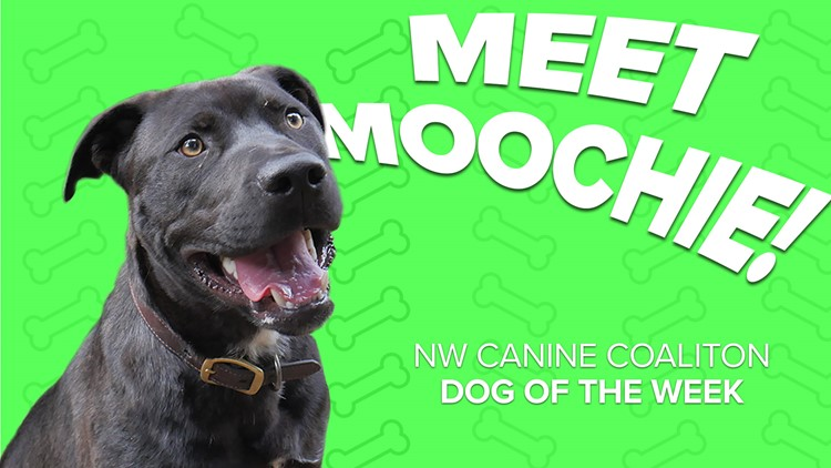 Canine Rescue of the Week: Moochie