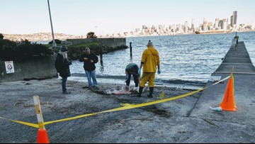 12 sea lions shot in Puget Sound area since September