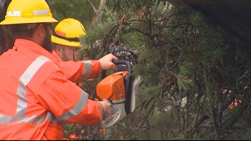 Wet, windy weather causes Thurston County power outages Tuesday