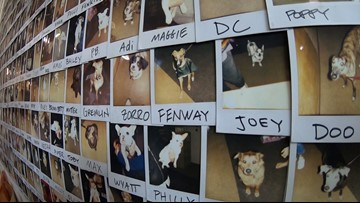 Georgetown's Wall of Dogs features thousands of furry faces