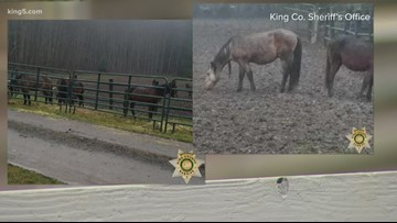25 abandoned horses rescued in Enumclaw