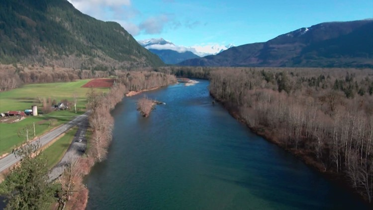 Seattle City Light told public their dam operations increased salmon runs as fish numbers declined