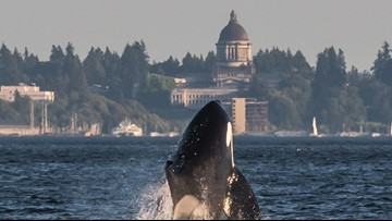One-third of orca task force recommendations moving forward