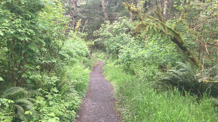 Hiking Ozette Triangle