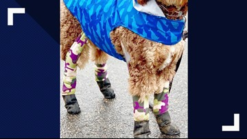Leggings for dogs? - That's a Thing?!