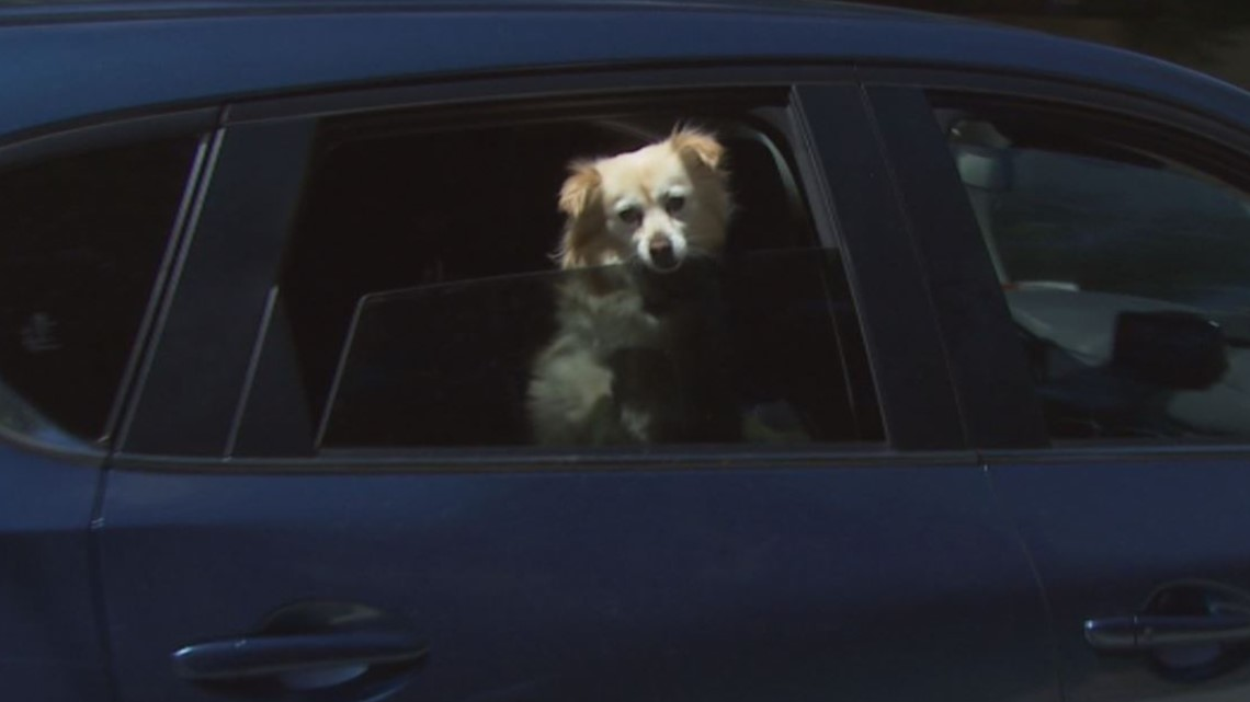Protect your pets during this week's Puget Sound hot streak