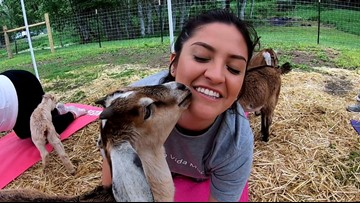 You can find nirvana with baby goats at this Tenino farm - KING 5 Evening
