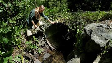 Washington state budget scrimps on replacing salmon-blocking culverts