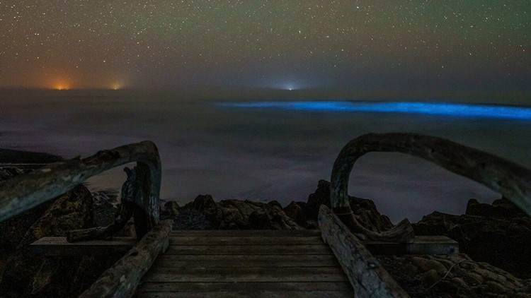 Waters off Washington coast glow blue with bioluminescence