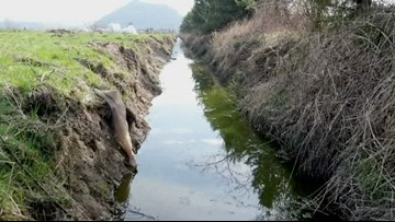 State audit on drainage district finances