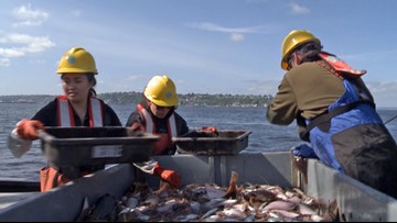 Contaminants in Puget Sound likely affecting salmon needed for orcas