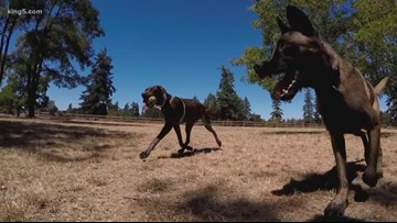 Camping tips for pet owners in the Pacific Northwest