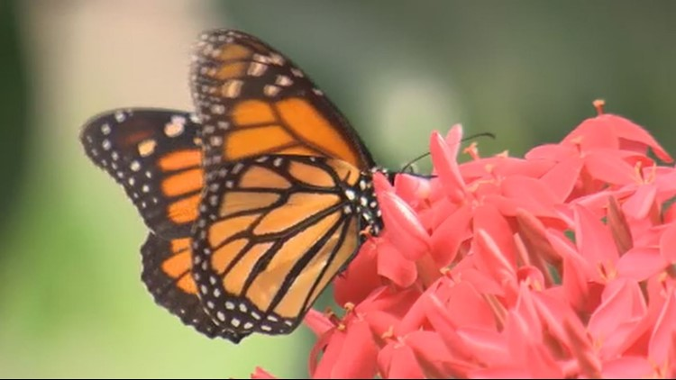 Pacific Science Center's Butterfly House is perfect for a rainy day with kids