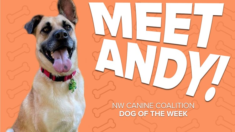 Canine Rescue of the Week: Andy