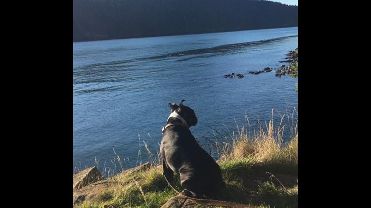 BTDT - Washington Park water view