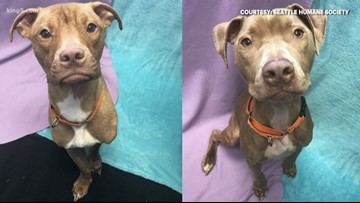 $5,000 reward for information on emaciated dogs found near Seattle
