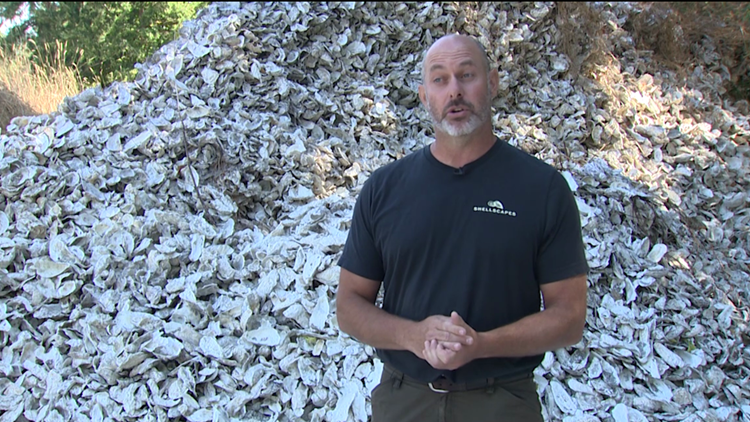 This Bainbridge man is turning oysters into sustainable landscapes