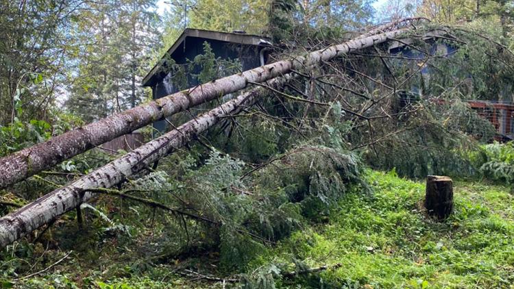 Tornado near Shelton knocks trees into home