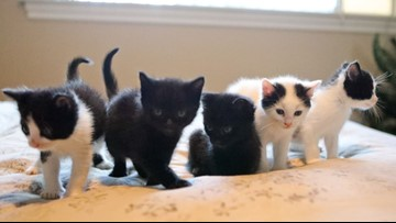 Newborn kittens dumped on I-90 in July ready for adoption