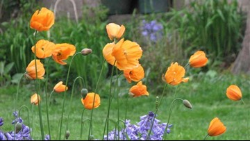 Spring gardening tips for the Pacific Northwest