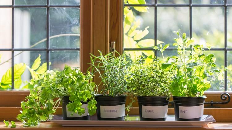 Winter gardening: Turn your windowsill into a mini herb garden!