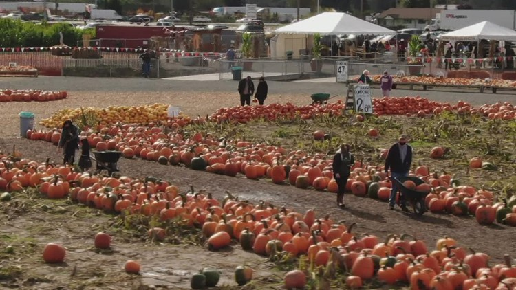 Carpinito Farms in Kent named one of the best pumpkin patches in the country