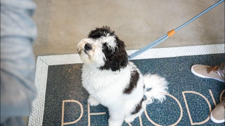 Pet pop-up shop in SLU 🐕🐩🐾   Local Lens Seattle