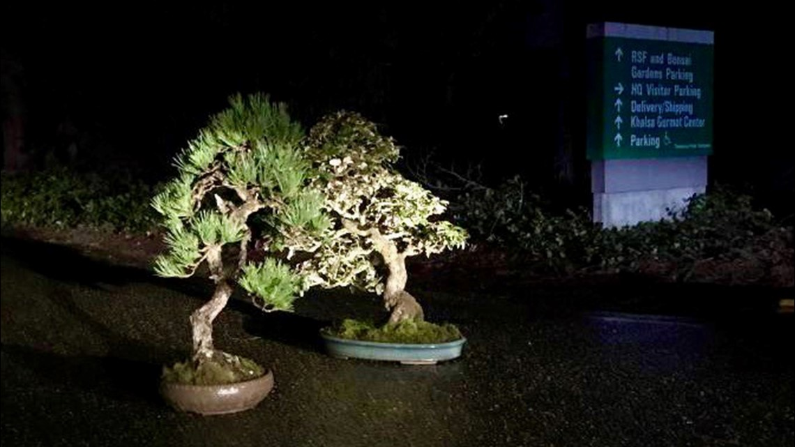 Stolen Bonsai Trees Mysteriously Returned To Federal Way Museum King5 Com