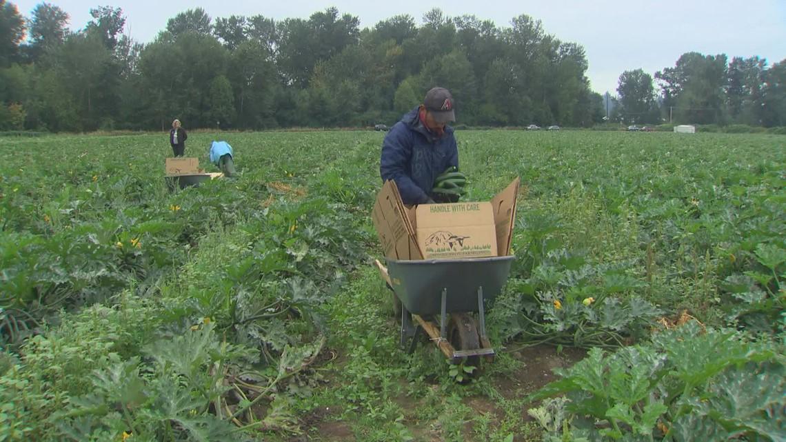 Critics fear Washington overtime law burdens farmworkers, businesses