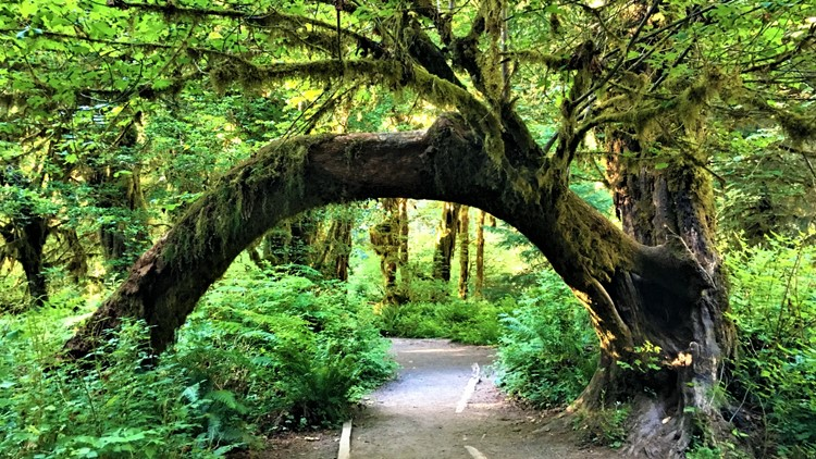 Check these National Parks off your bucket list this summer - New Day NW