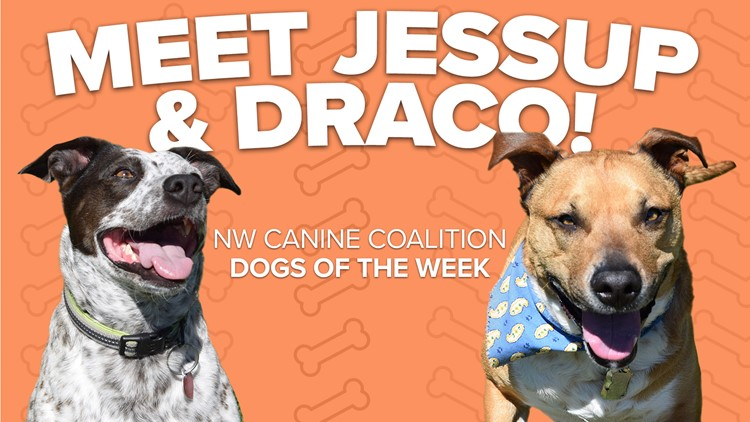 Canine Rescue of the Week: Jessup and Draco