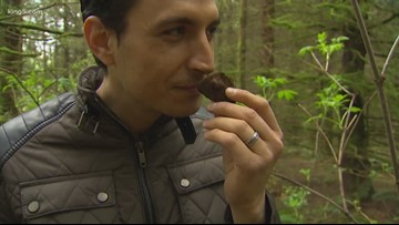 Pride of PNW: Truffle hunting