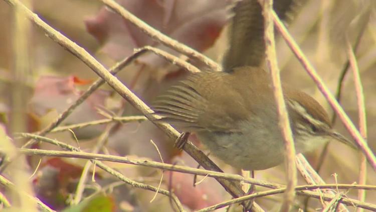 Salmonella outbreak among birds sickens six in Washington state