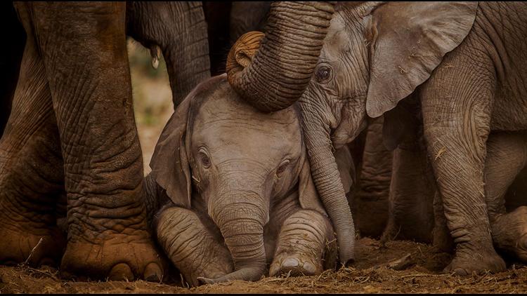 Baby Elephants Azamara Cruises