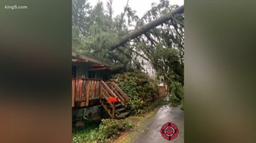Falling trees injure man, hikers during storm