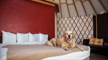 The doggone best places to go for a weekend getaway - New Day NW