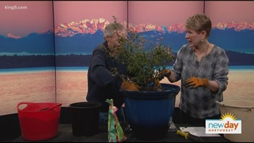 Get in the know on how to grow blueberries with Ciscoe - New Day Northwest
