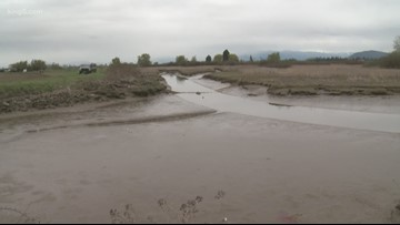 Skagit River estuary restoration helps salmon needed for orcas