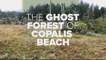 The ghost forest of Copalis Beach