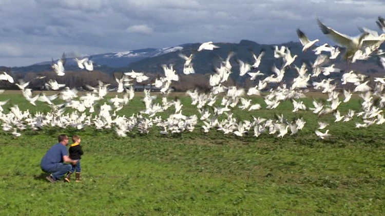 Turn off your lights to help migrating birds in Washington