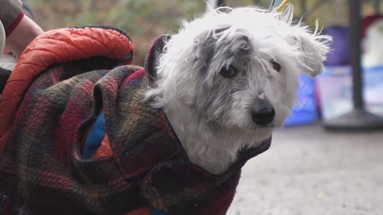 'The need is huge': Seattle program offers veterinary care to pets of people living unhoused