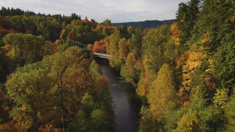 Drone footage of fall foliage