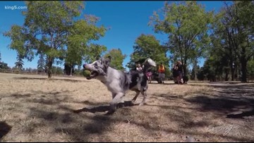 Western Washington's BEST Dog Park pleases people and pooches - KING 5 Evening