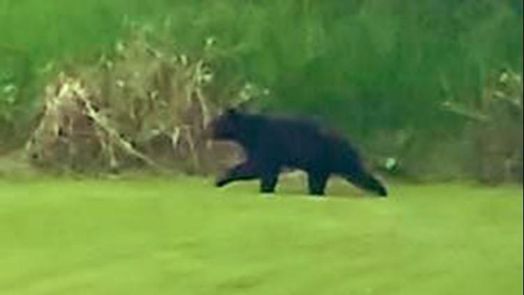 Redmond posts warnings after multiple black bear sightings in the city