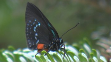 The butterflies are back at Woodland Park Zoo