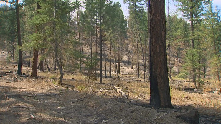 Can a forest survive a wildfire? Washington experts are testing it