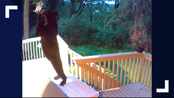 Hungry bears caught on camera looking for food in Redmond