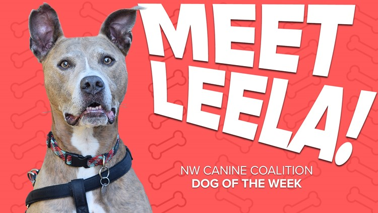 Canine Rescue of the Week: Leela