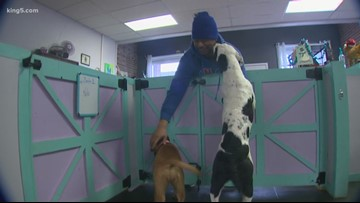 Good Samaritan takes in dogs surrendered after Tacoma park tent ban enforced