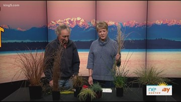 Ciscoe Morris gives gardening tips - New Day Northwest